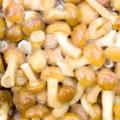 Що приготувати з заморожених грибів опеньків, рецепт