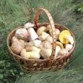 Як чистити гриби