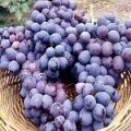 Як потрібно правильно обрізати виноград на зиму