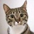 Чому кішки кашляють?