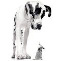 Домінування у собак