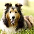 Які вітаміни для собак необхідні