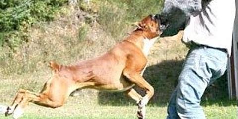 Що робити при укусі собакою, після укусу. Якщо вкусила отруйна змія