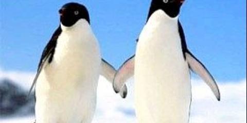 Де живуть пінгвіни