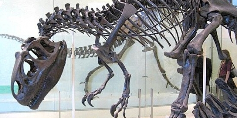 Кістки динозаврів в музеях - це насправді не кістки