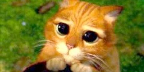 Чи не привчайте кошенят до рук - потім не злізуть