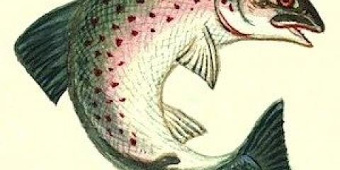 Незважаючи на те, що риби дихають зябрами, у більшості з них є ніс