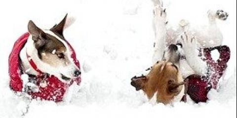 Особливості харчування цуценят і молодих собак