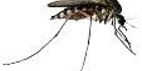 Чому комарі кусають людину?