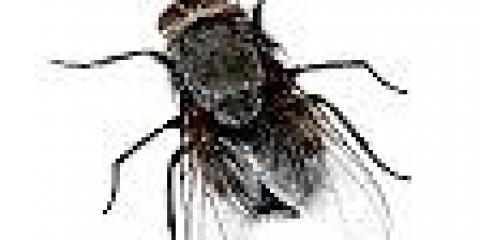 Чому дзижчить муха?