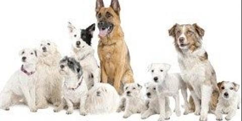 Заохочення собак їжею або вкусопоощрітельний метод