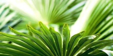 Рослини можуть бути набагато благороднішим, ніж ми про них думаємо