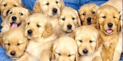 Ріст і розвиток собаки
