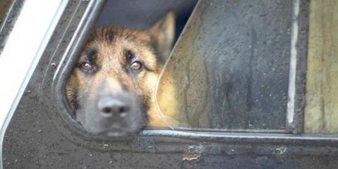 Службові собаки при пошуку наркотиків помиляються більш ніж в 50% випадків