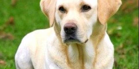 Собаки доглядають за своїми хворими родичами