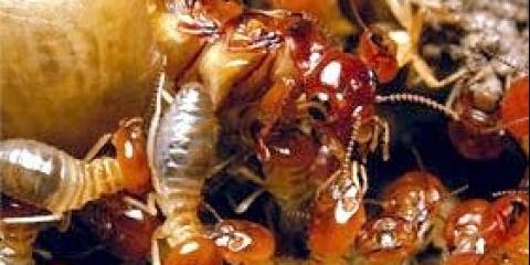 Терміти мурахи цікаві факти