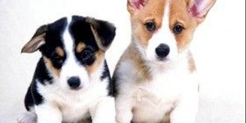 Догляд собаки за цуценятами