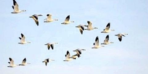 Зимуючі і перелітні птахи: назви птахів, цікаві факти