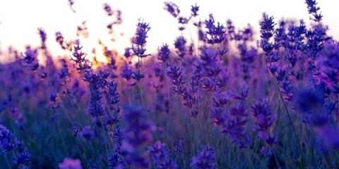 11 Природних ароматів, які здатні змінити твій настрій. Навчися контролювати свої емоції!