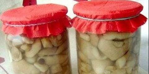 Консервовані маслюки на зиму - фото рецепти консервації