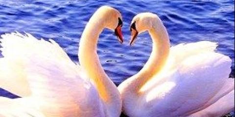 Умовна і безумовна любов